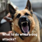 Best Protection Devices to Use Against Dog Attacks
